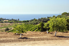 Vineyards of Alella Stock Photos