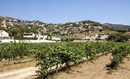 Vineyards of Alella royalty free stock photography