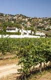 Vineyards of Alella royalty free stock image