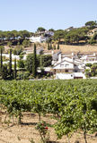 Vineyards of Alella Stock Photo