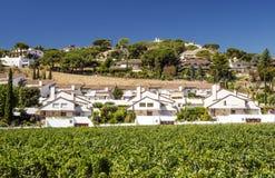 Vineyards of Alella stock images