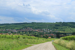 Vineyards all over in Alsace, France Royalty Free Stock Photos