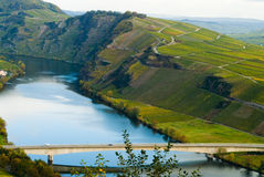 Vineyards along the mosel Stock Photo
