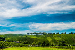 Vineyards along the Moselle river, Luxembourg. Hill s covered by vineyards along the Moselle river in Remich, Luxembourg Stock Photography