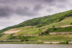 The vineyards along the Rhine Valley, Germany Royalty Free Stock Photo