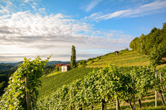 Vineyards along the South Styrian Wine Road in autumn, Austria Stock Images