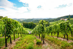 Vineyards along the South Styrian Wine Road in autumn, Austria Stock Photography
