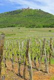 Vineyards in Alsace Royalty Free Stock Images