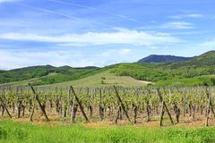 Vineyards in Alsace Royalty Free Stock Photos