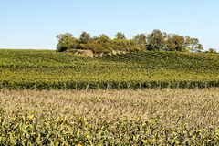 Vineyards by Alsace Royalty Free Stock Photography