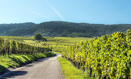 Vineyards by Alsace Stock Photography