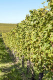 Vineyards of Alsace Stock Image