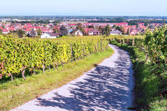 Vineyards by Alsace Royalty Free Stock Photo