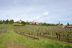 Vineyards in Alsace Royalty Free Stock Photo