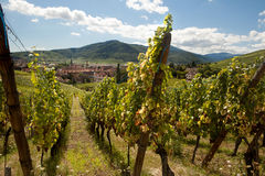 Vineyards of Alsace village Stock Photo