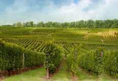 Vineyards on Alsatian hills Royalty Free Stock Photography
