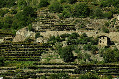 Vineyards of Aosta Valley, Italy. Vineyards on the slopes of Italian Alps in Aosta Valley (Val d'Aosta) - a famous region with its wine, food and medieval stock image