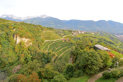 Vineyards and Apple plantation in South Tyrol, Italy Royalty Free Stock Photography