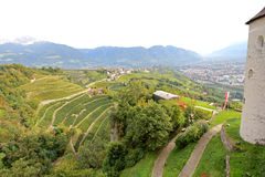 Vineyards and Apple plantation in South Tyrol, Italy Royalty Free Stock Image