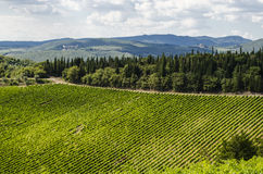 Vineyards in the area of Chianti Stock Photography
