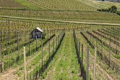 Vineyards 3. Vineyards in the area of Lower Austria Stock Photos
