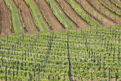 Vineyards 5. Vineyards in the area of Lower Austria Royalty Free Stock Images