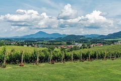 Vineyards in the area of Slovenske Konjice stock photography