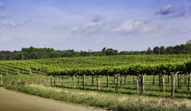 Vineyards In Arkansas Wine Country Royalty Free Stock Photo