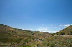 Vineyards around Bandama. Gran Canaria, part of Tafira protected landscape stock image