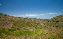 Vineyards around Bandama. Gran Canaria, part of Tafira protected landscape stock photos