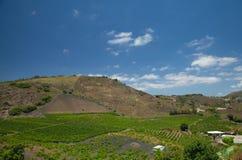Vineyards around Bandama Royalty Free Stock Image