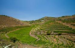 Vineyards around Bandama. Gran Canaria, part of Tafira protected landscape stock photo