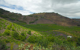 Vineyards around Bandama. On Gran Canaria, part of Tafira protected landscape royalty free stock photography