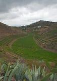 Vineyards around Bandama. On Gran Canaria, part of Tafira protected landscape royalty free stock photo