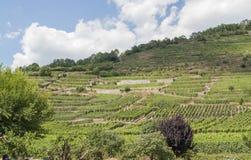 Vineyards around Kaysersberg Stock Photos