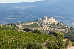 Vineyards around Montalcino and San Antimo Royalty Free Stock Photography