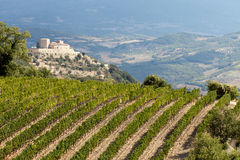 Vineyards around Montalcino and San Antimo Royalty Free Stock Images