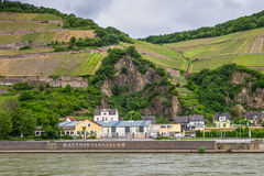 Vineyards in the Assmannshausen village Royalty Free Stock Images