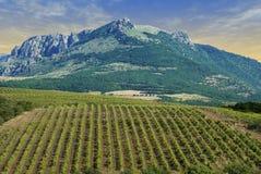 Vineyards At Bottom Of Mountai Royalty Free Stock Image