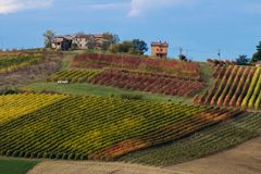 Rows of vine lambrusco autumn colors wine festival of grape royalty free stock photography