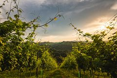 Vineyards in Austria south Styria, wine country. Gamlitz, Leibnitz, Styria , Austria - Vineyards Sulztal area south Styria, wine country, street tourist spot royalty free stock photography