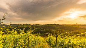 Vineyards in Austria south Styria, wine country. Gamlitz, Leibnitz, Styria , Austria - Vineyards Sulztal area south Styria, wine country, street tourist spot stock image