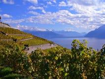 Vineyards in Automn. Vineyards Lavaux region, Switzerland, in automn stock image