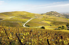 Vineyards in autumn Royalty Free Stock Photo