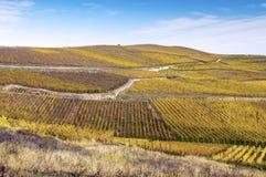 Vineyards in autumn Royalty Free Stock Photo