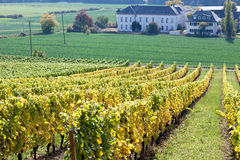 Vineyards in autumn Royalty Free Stock Images