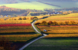 The vineyards in autumn Stock Photography