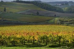 Vineyards in autumn. Autum paints the vineyards with yellow and red tones Royalty Free Stock Image