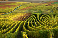 Vineyards in autumn colors Royalty Free Stock Photo