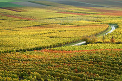 Vineyards in autumn colors Stock Images